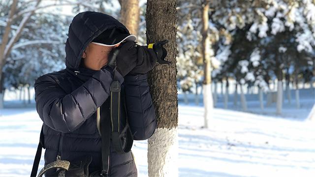 沈陽雪後銀裝素裹 吸引市民觀賞拍照