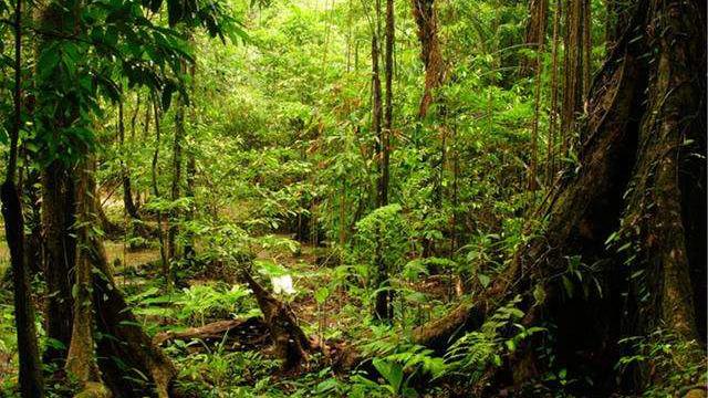 遼寧省林農採伐人工商品林正式實行告知承諾制