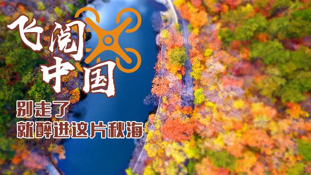 """【""""飛閱""""中國】別走了 就醉進這片秋海"""
